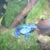 December 2009 Mix...with a Poison Dart Frog