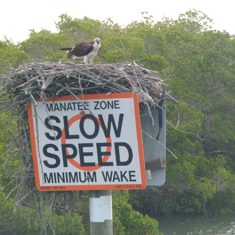 Slow Your Life Down