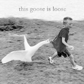 This Goose Is Loose