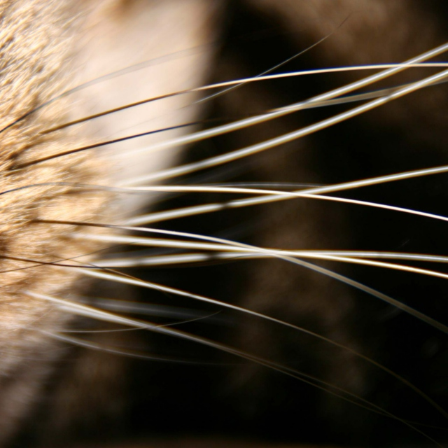 Doin' it for the Whiskers.