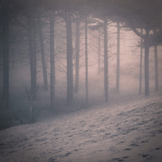 Warm Hands in Cold Fog