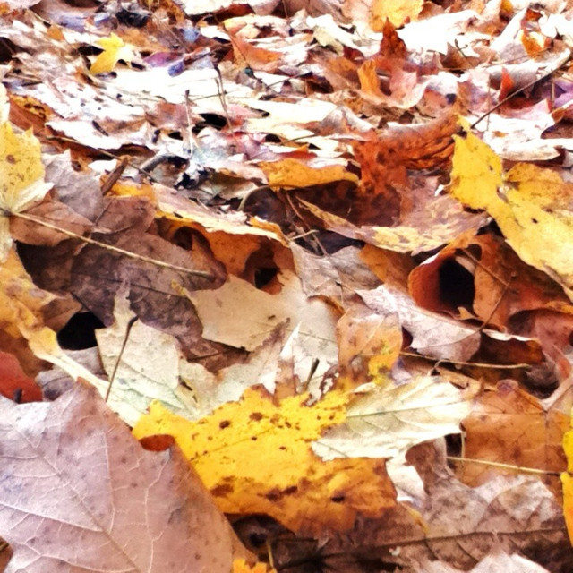 Crunchy Leaves and Cool Sunlight
