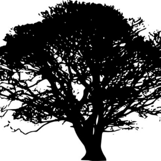Trees Are Fractal