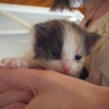Our New Kitten - The 'Susie' Mix