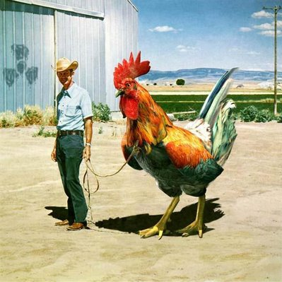 Ain't Nobody Here But Us Chickens