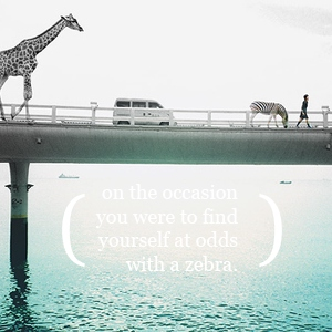 On the Occasion You Were to Find Yourself at Odds with a Zebra