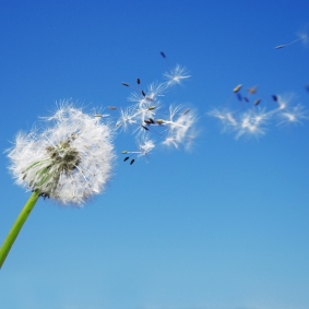 The Year Of The Dandelion Seed