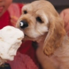 Puppy Dogs and Ice Cream