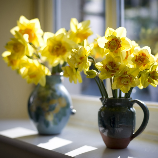 Whoop, whoop, there's daffodils in the garden!