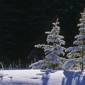 Under the Snow: A Canadian Music Expose Series #'s 1-8
