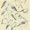 birds in my mind
