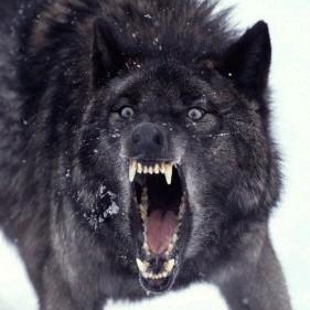 Insanity Wolf; Get On My Level