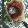 Almost A Lion