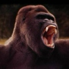 That gorilla is what this music looks like.