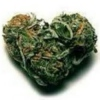Kush is my cologne.