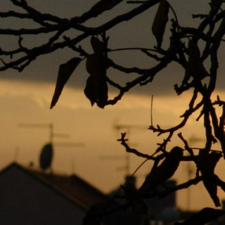 Laundry Lines in Autumn Times