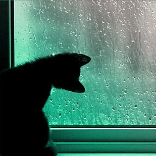 Rain Dances on my Window Pane