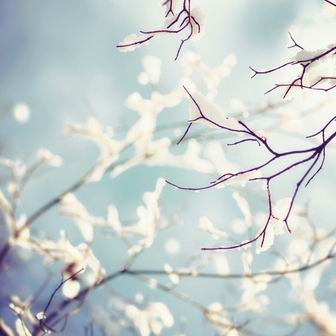 As Snow Settles on the Branches