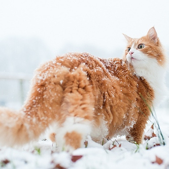 it is winter and you are cold and sad and lonely.