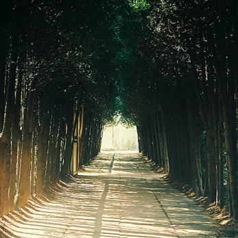 walk with some peace of mind...and this playlist..