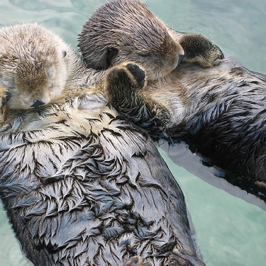 You Otter Be My Valentine (The Worst Pun Ever Made)