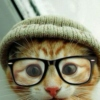 Hipster cat approved.