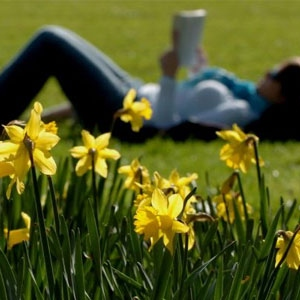 Lay in the Grass! (Be Happy, Its Spring)