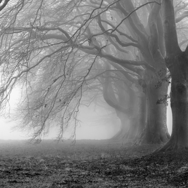 Confusion & the Mist