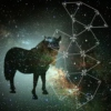Pony in the space