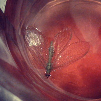 i killed the only dragonfly in town with leftover jello shooters this one time