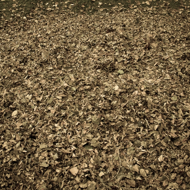 Tas de feuilles ( Pile of leaves)