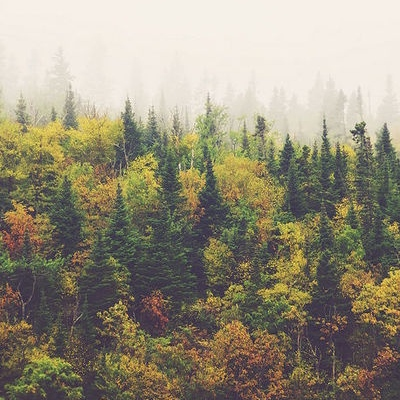 Autumn Mix For the Indie Soul