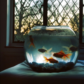 Living in a goldfishbowl