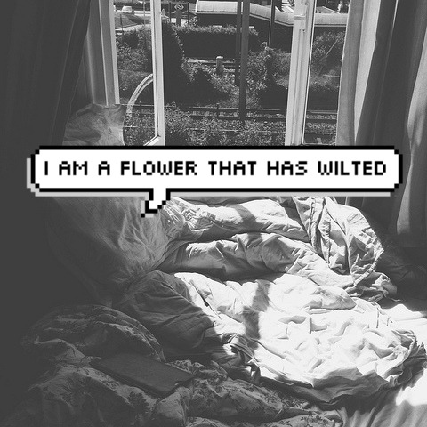 i am a flower that has wilted