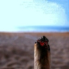 Smoke a Blunt at the Beach