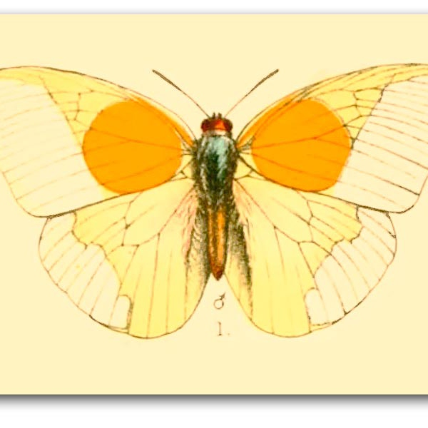 For my lepidoptera