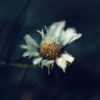 Days of a Daisy: Winter