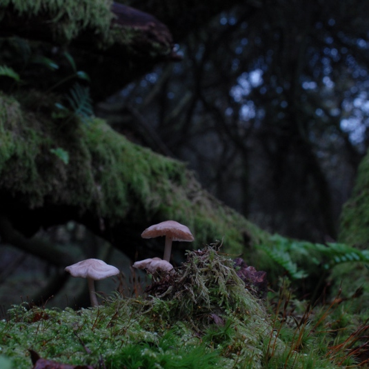 The Coming of the Woodland Faeries