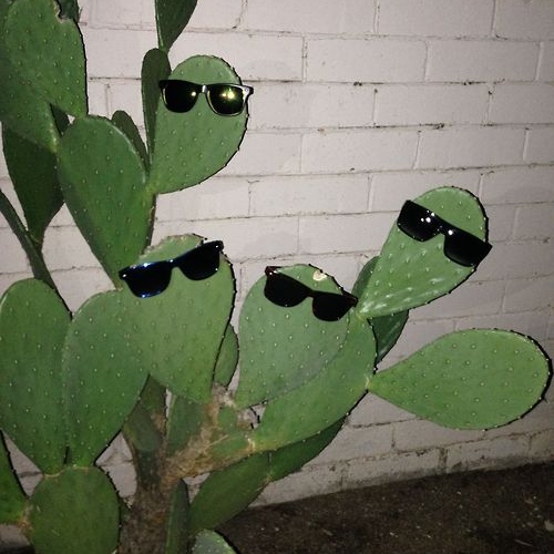 Cool as a Cactus
