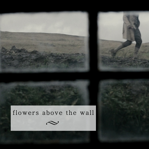 Flowers above the wall