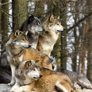 Wolves, Men and Other Mythical Creatures