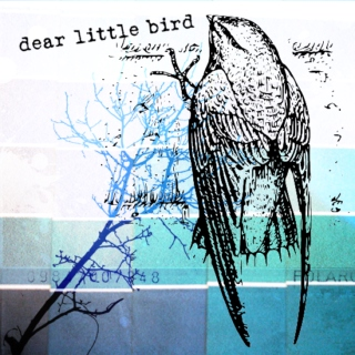 dear little bird