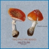 Two Fruiting Bodies