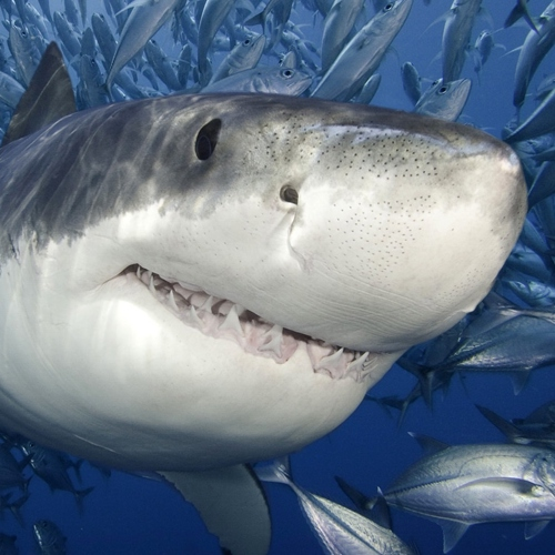 This Shark Wants You To Listen To This Mix