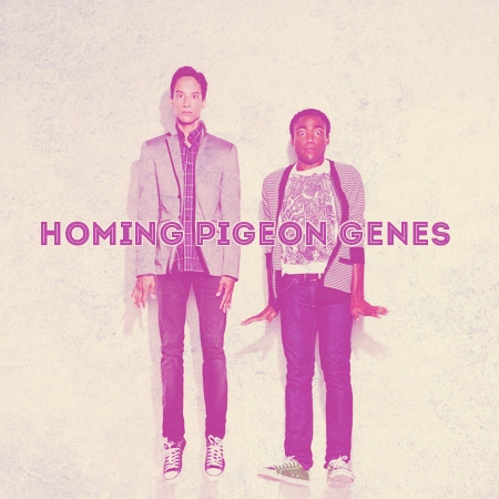 Homing Pigeon Genes [a Troy/Abed fanmix]