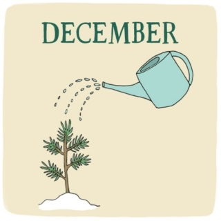 December: The Birth of Hope
