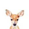 I'm Quite Fawn'd Of You My Deer