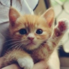Gimme paw...oops five!