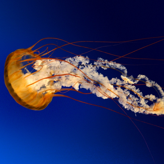 Jellyfish mode