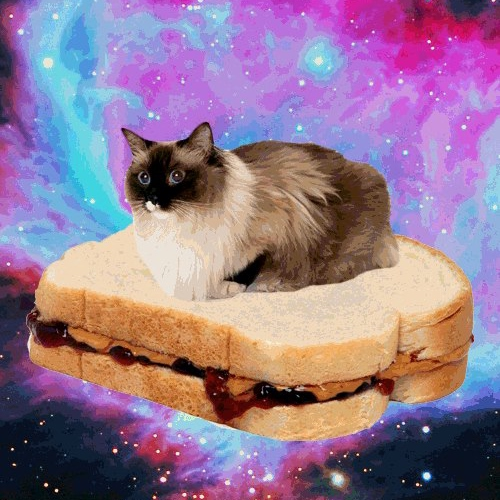 Get on the sandwich, no time for explanations!